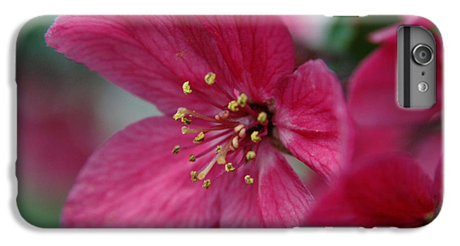 Flora IPhone 6 Plus Case featuring the photograph Untitled by Kathy Schumann