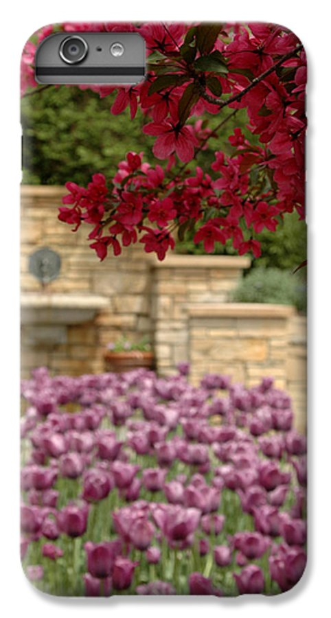 Tulips IPhone 6 Plus Case featuring the photograph Untitled by Kathy Schumann