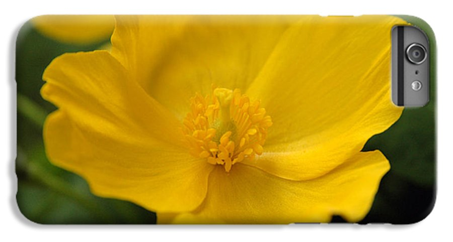 Yellow IPhone 6 Plus Case featuring the photograph Untitled by Kathy Schumann
