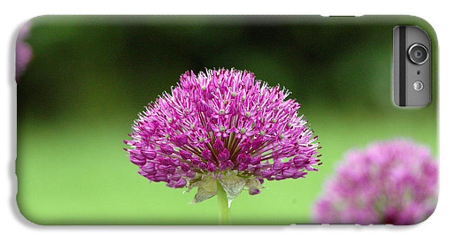 Purple IPhone 6 Plus Case featuring the photograph Untitled by Kathy Schumann