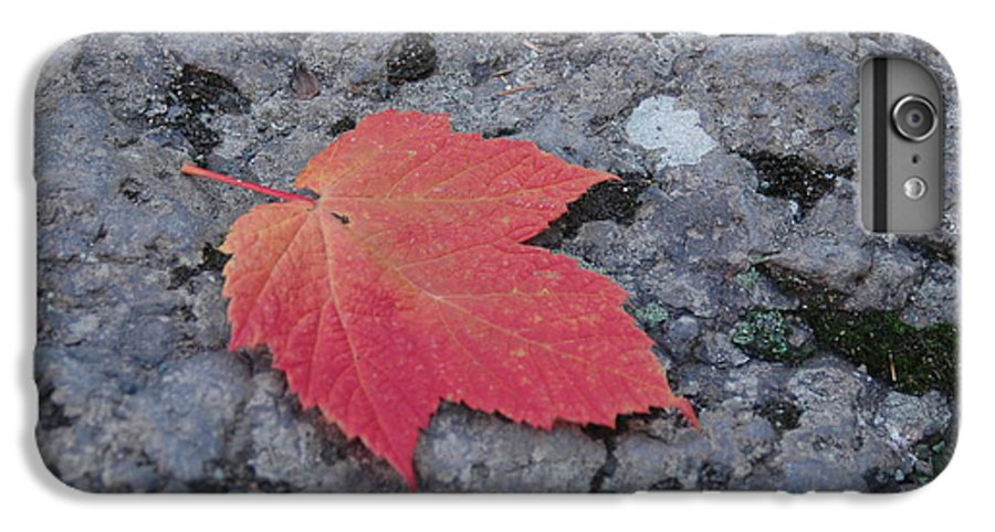 Leaf IPhone 6 Plus Case featuring the photograph Untitled by Kathy Schumann