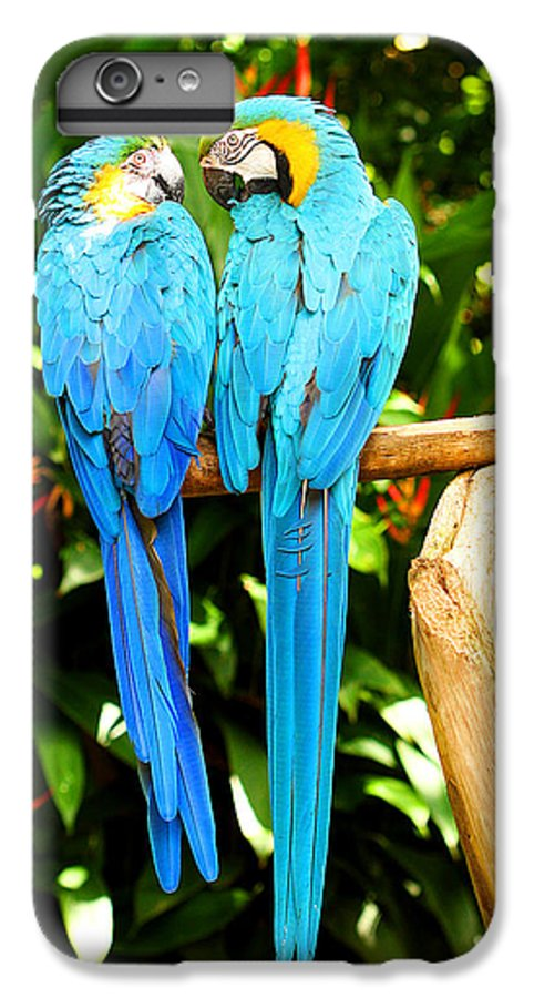 Bird IPhone 6 Plus Case featuring the photograph A Pair Of Parrots by Marilyn Hunt