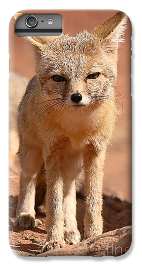 Fox IPhone 6 Plus Case featuring the photograph Adult Kit Fox Ears And All by Max Allen