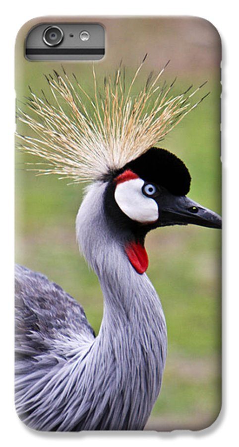 Bird IPhone 6 Plus Case featuring the photograph African Crowned Crane by Douglas Barnett