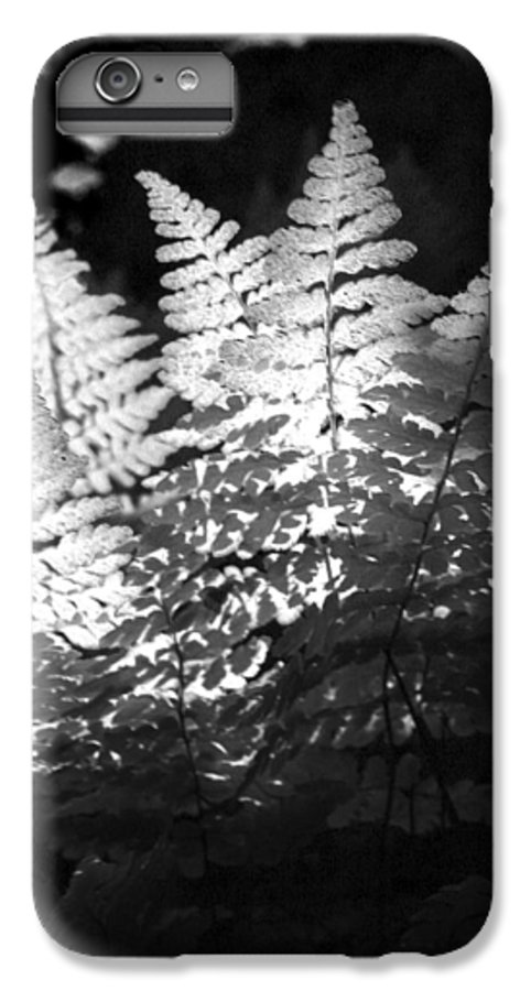 Fern IPhone 6 Plus Case featuring the photograph After Glow by Randy Oberg
