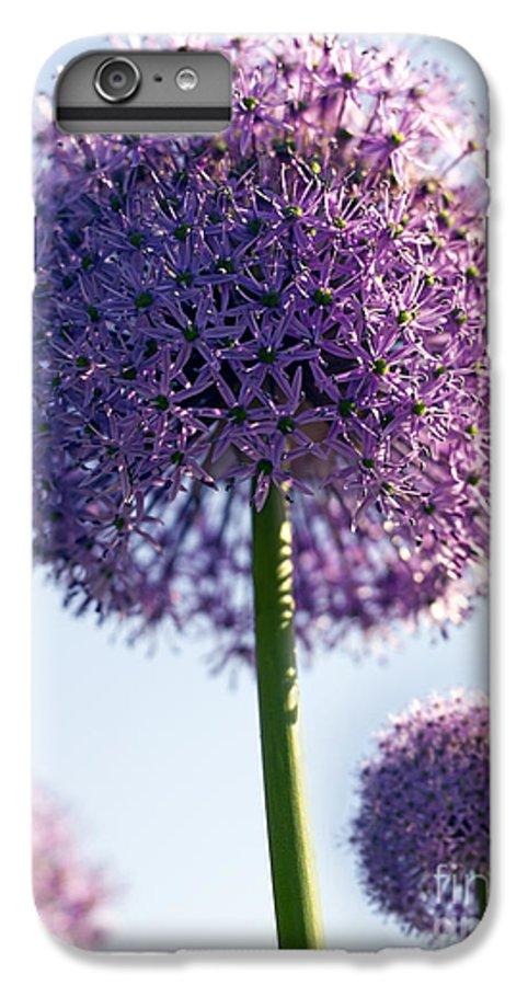 Allium IPhone 6 Plus Case featuring the photograph Allium Flower by Tony Cordoza