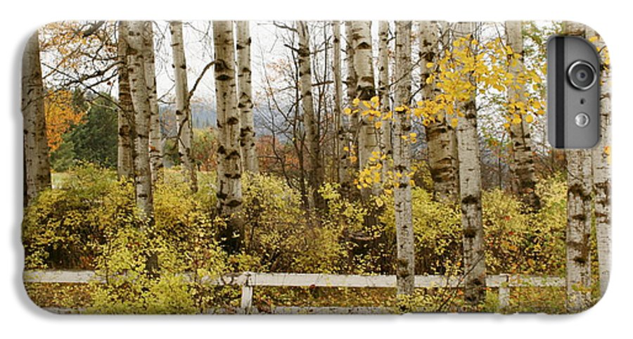 Grove IPhone 6 Plus Case featuring the photograph Autumn Grove by Idaho Scenic Images Linda Lantzy