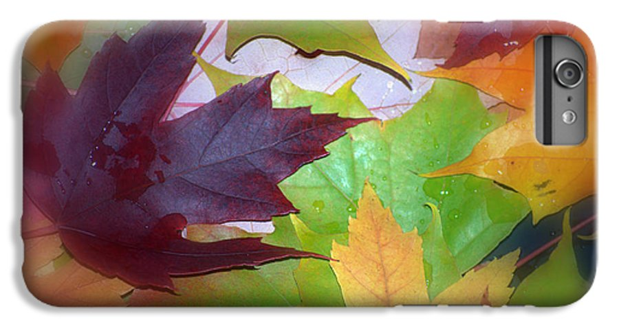 Trees IPhone 6 Plus Case featuring the photograph Autumn by Larry Keahey
