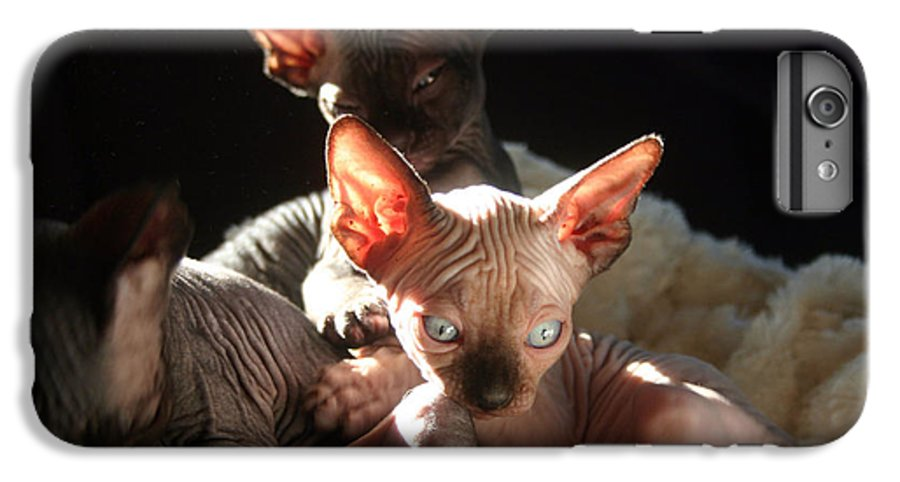 Photo IPhone 6 Plus Case featuring the photograph Baby Sphynx Cats by Ruben Flanagan