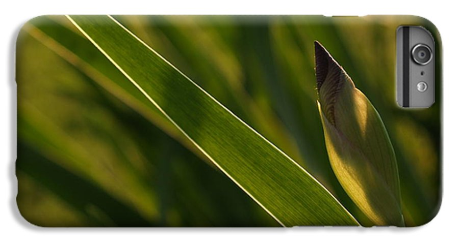Iris IPhone 6 Plus Case featuring the photograph Backlit Iris Bud In Evening by Anna Lisa Yoder