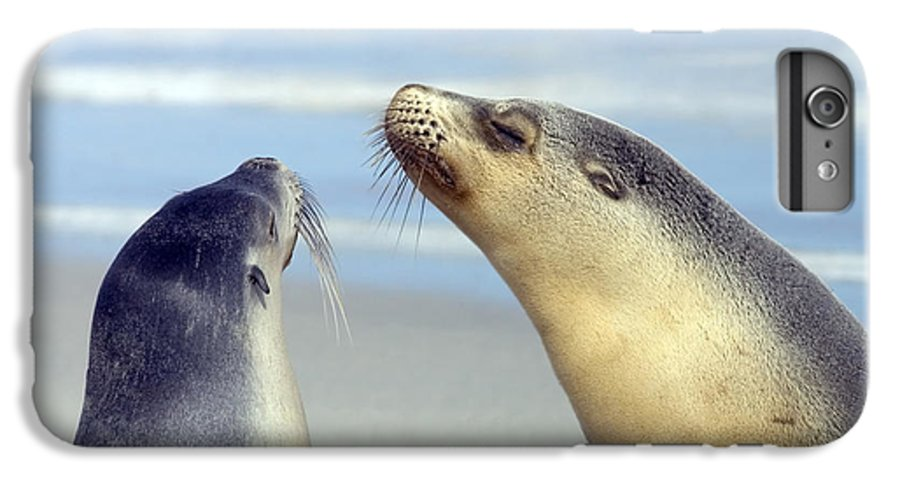 Sea Lion IPhone 6 Plus Case featuring the photograph Backtalk by Mike Dawson