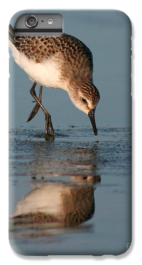 Sanderling IPhone 6 Plus Case featuring the photograph Ballet Feeding Of A Sanderling by Max Allen