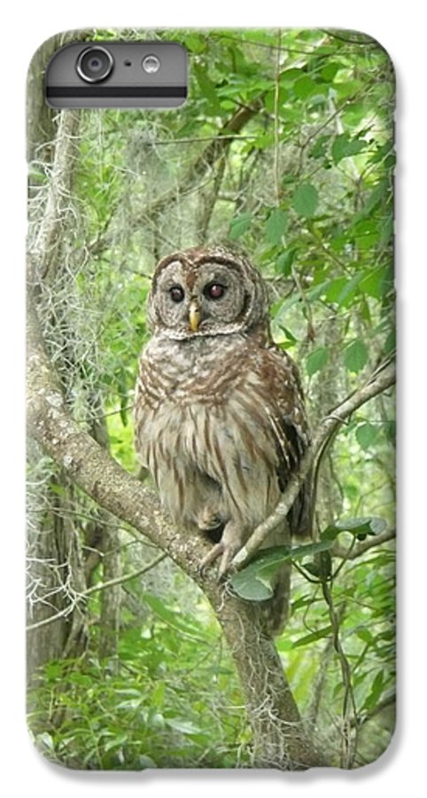 Nature IPhone 6 Plus Case featuring the photograph Barred Owl I by Kathy Schumann