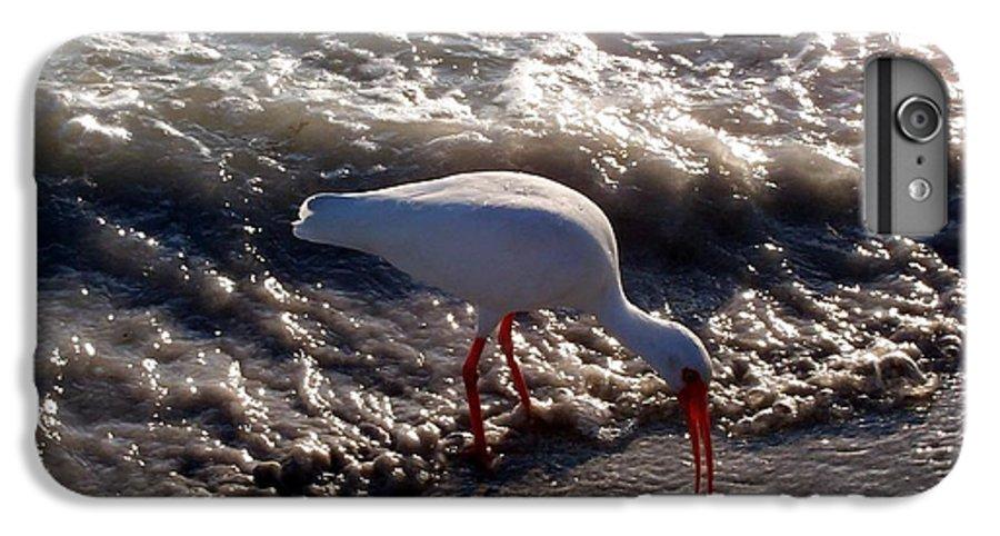 Beach IPhone 6 Plus Case featuring the photograph Beach Bird by Elizabeth Klecker