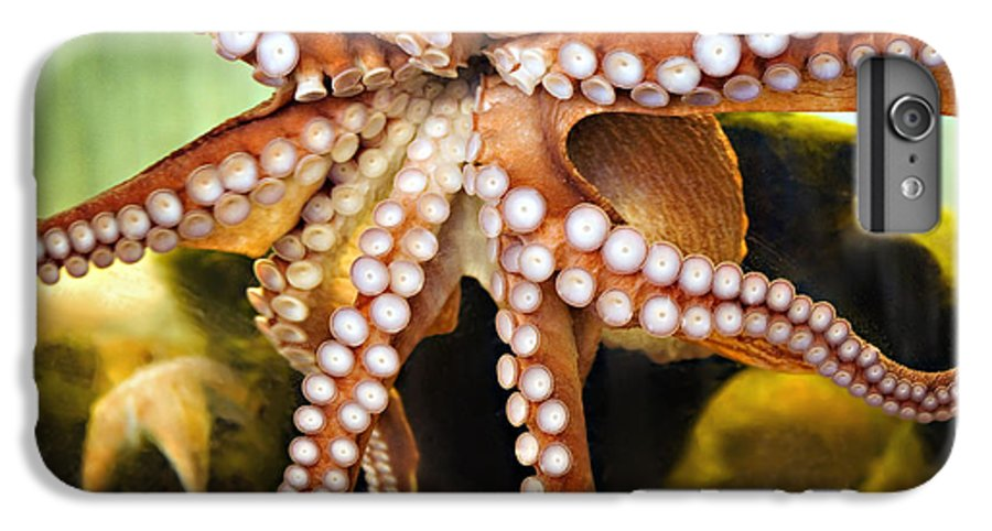 Octopus IPhone 6 Plus Case featuring the photograph Beautiful Octopus by Marilyn Hunt