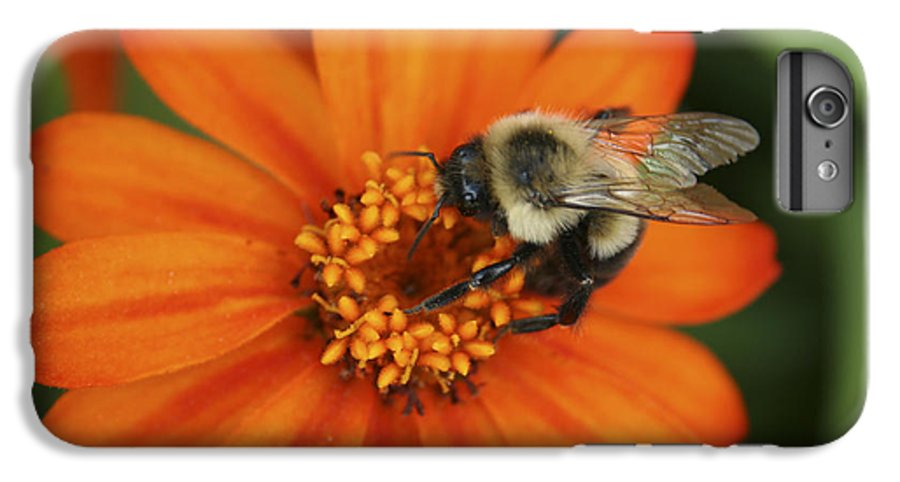 Bee IPhone 6 Plus Case featuring the photograph Bee On Aster by Margie Wildblood