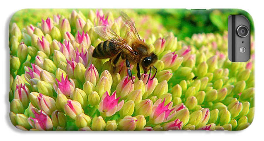 Flowers IPhone 6 Plus Case featuring the photograph Bee On Flower by Larry Keahey