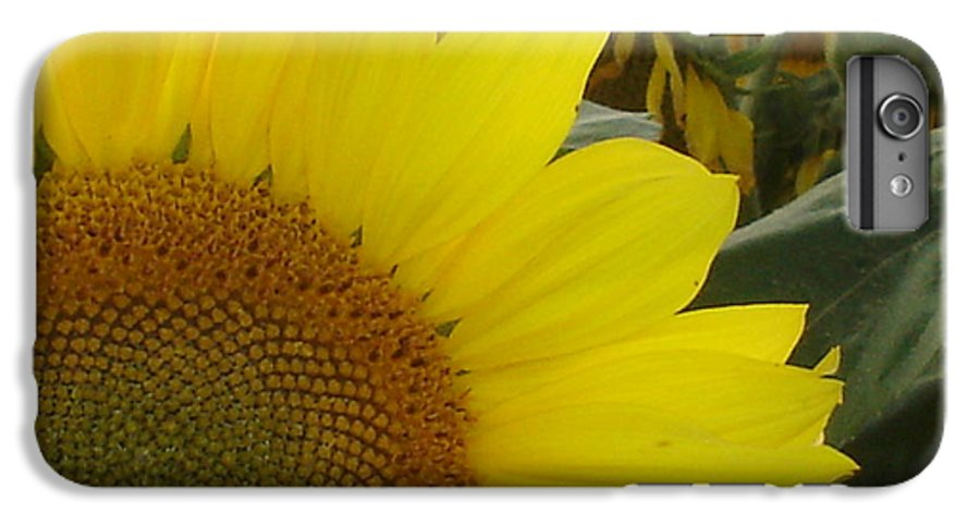 Bee's IPhone 6 Plus Case featuring the photograph Bee On Sunflower 1 by Chandelle Hazen