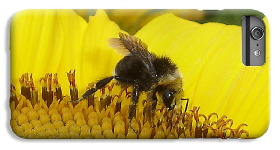 Bee's IPhone 6 Plus Case featuring the photograph Bee On Sunflower 2 by Chandelle Hazen
