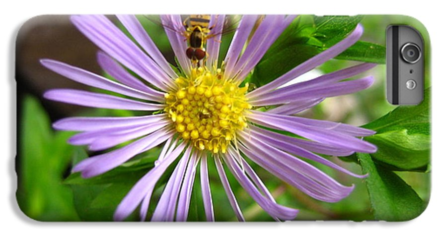 Bee IPhone 6 Plus Case featuring the photograph Bee On Wildflower by Melissa Parks