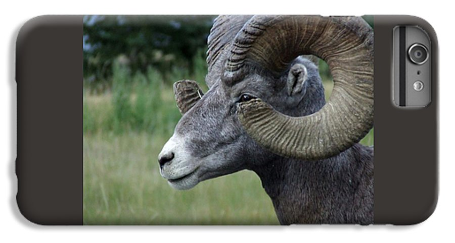 Big Horned Ram IPhone 6 Plus Case featuring the photograph Bighorned Ram by Tiffany Vest