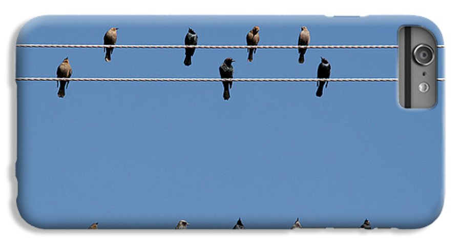 Birds IPhone 6 Plus Case featuring the photograph Bird On A Wire by Christine Till