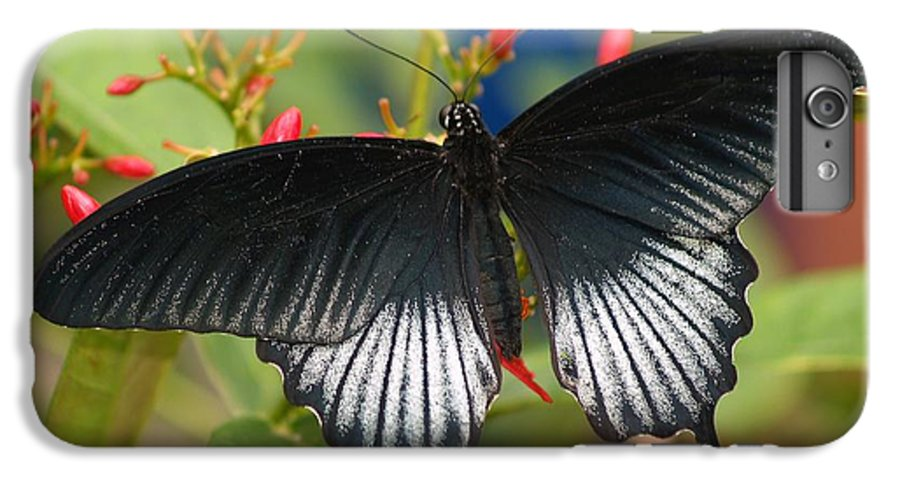 Butterfly IPhone 6 Plus Case featuring the photograph Black Beauty by Gaby Swanson