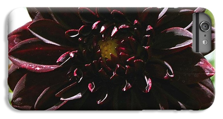Flower IPhone 6 Plus Case featuring the photograph Black Dalia by Dean Triolo