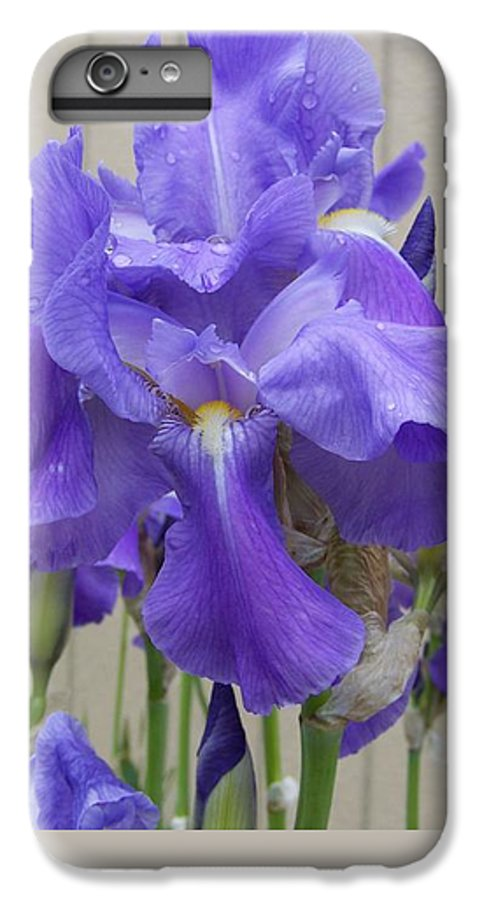 Flowers IPhone 6 Plus Case featuring the photograph Blue Iris by Laurie Kidd