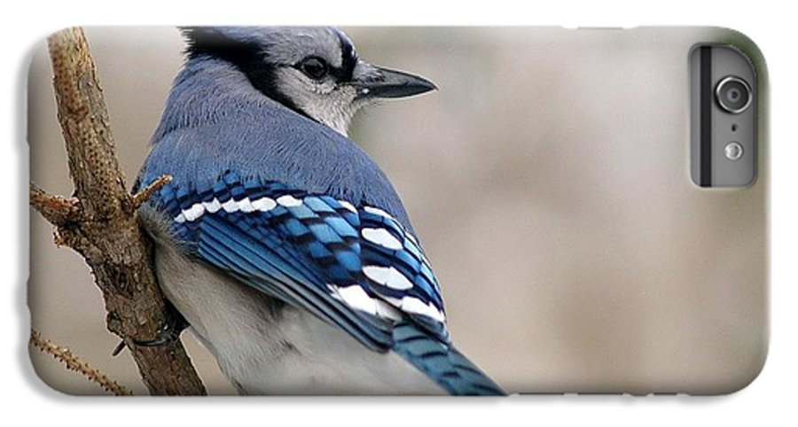 Blue Jay IPhone 6 Plus Case featuring the photograph Blue Jay by Gaby Swanson