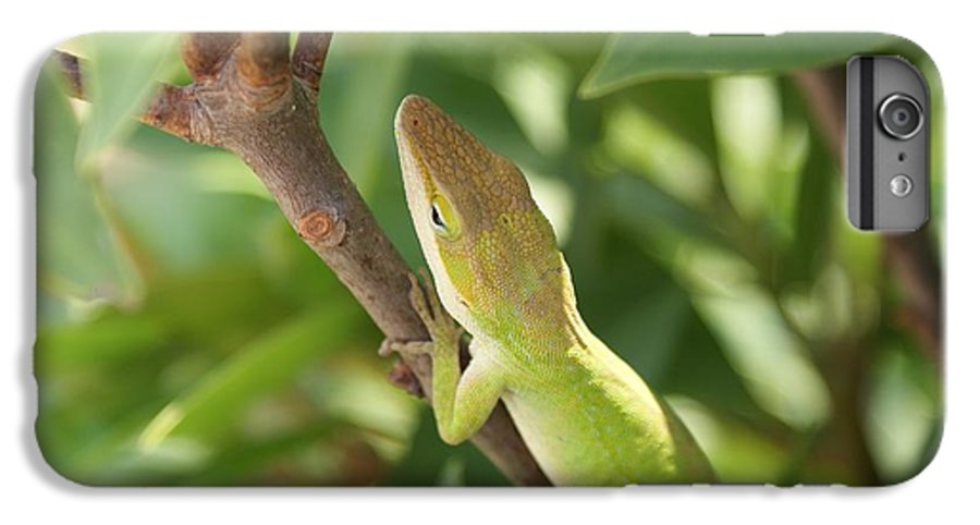 Lizard IPhone 6 Plus Case featuring the photograph Blusing Lizard by Shelley Jones