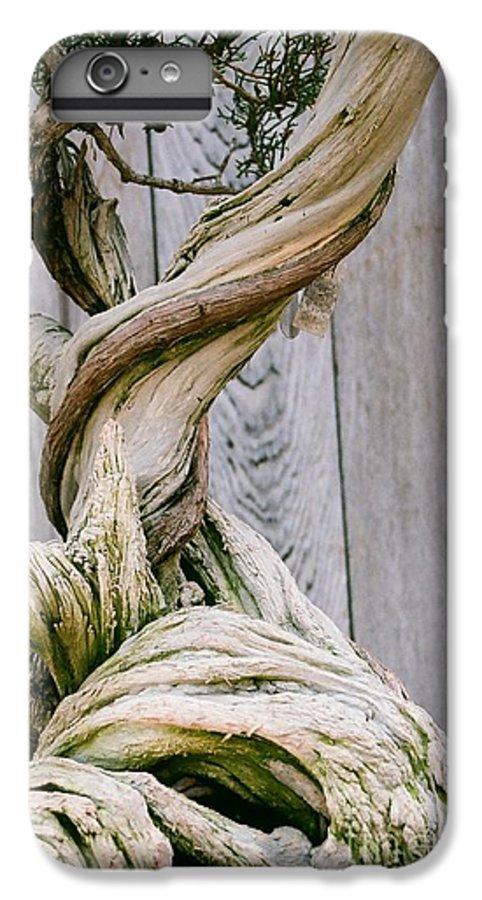 Tree IPhone 6 Plus Case featuring the photograph Bonsai by Dean Triolo