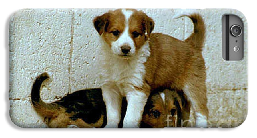 Puppies IPhone 6 Plus Case featuring the photograph Brothers by Kathy McClure