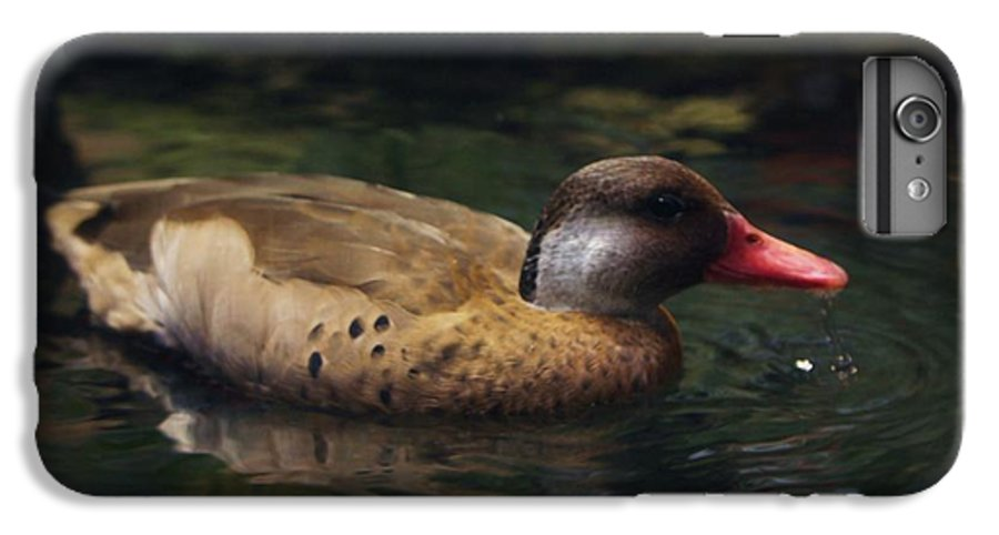 Duck IPhone 6 Plus Case featuring the photograph Brown Duck by Kenna Westerman