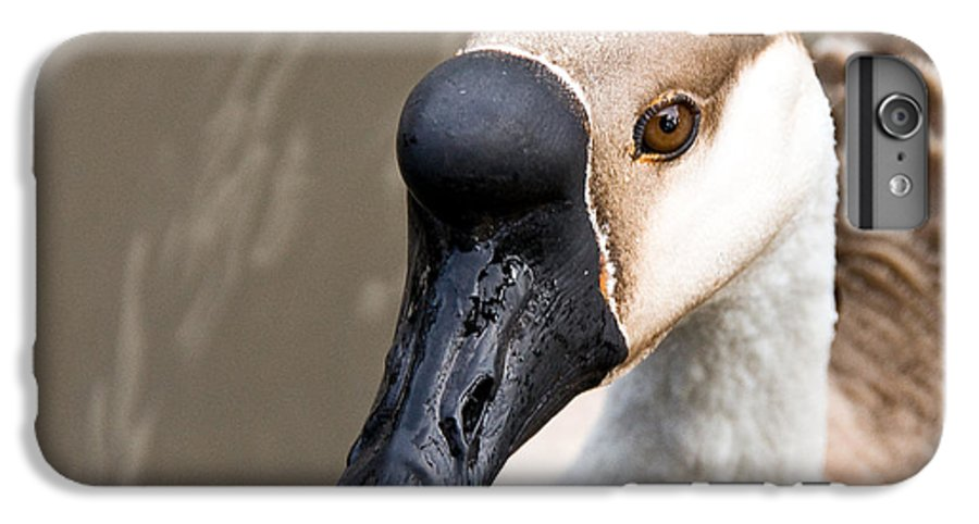 Chinese Brown Goose IPhone 6 Plus Case featuring the photograph Brown Eye by Christopher Holmes