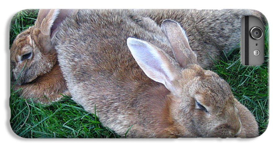 Rabbit IPhone 6 Plus Case featuring the photograph Brown Rabbits by Melissa Parks