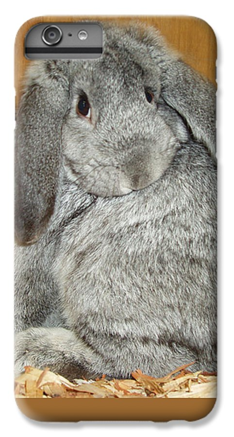 Bunny IPhone 6 Plus Case featuring the photograph Bunny by Gina De Gorna