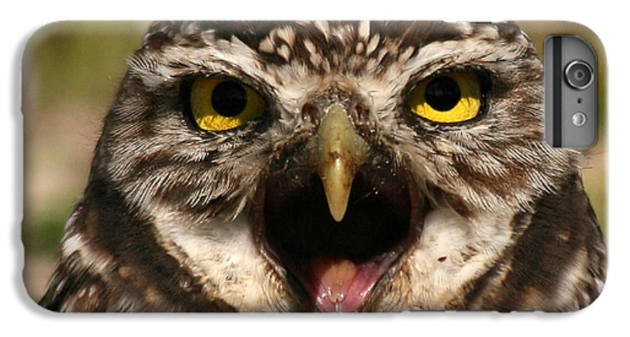 Owl IPhone 6 Plus Case featuring the photograph Burrowing Owl Eye To Eye by Max Allen
