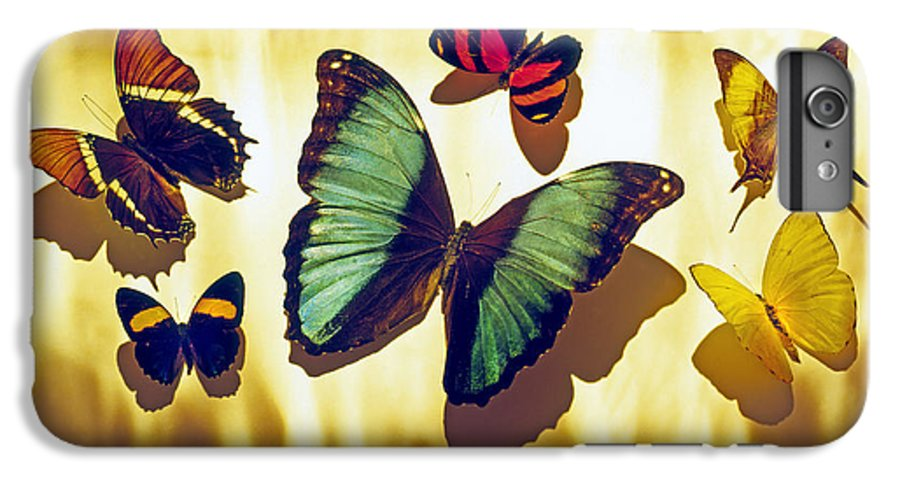 Animals IPhone 6 Plus Case featuring the photograph Butterflies by Tony Cordoza