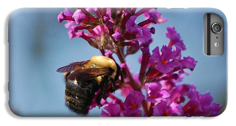 Bee IPhone 6 Plus Case featuring the photograph Buzzed by Debbi Granruth