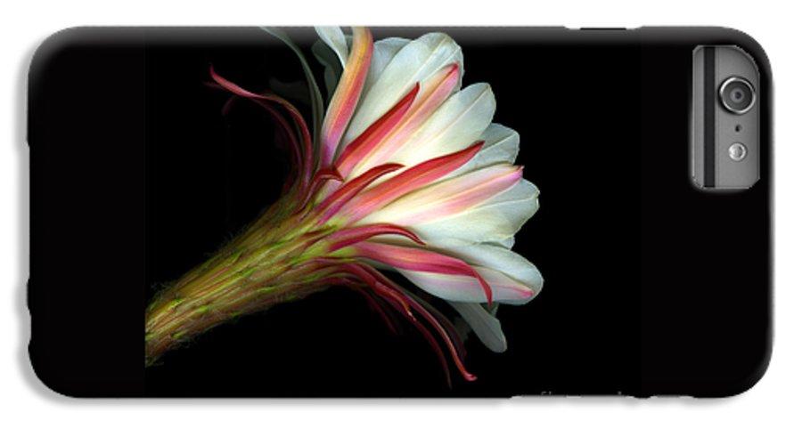 Scanart IPhone 6 Plus Case featuring the photograph Cactus Flower by Christian Slanec