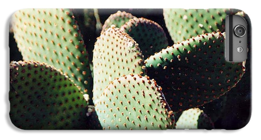 Field IPhone 6 Plus Case featuring the photograph Cactus by Margaret Fortunato