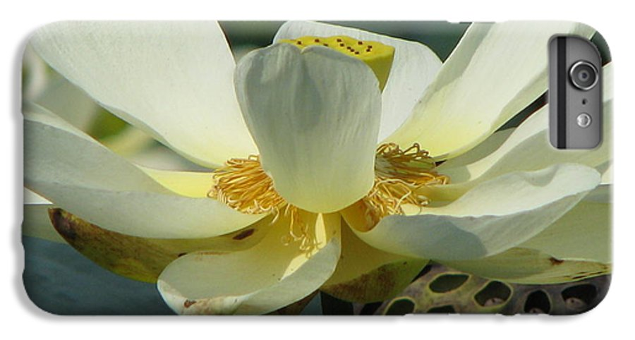 Lotus IPhone 6 Plus Case featuring the photograph Calm by Amanda Barcon
