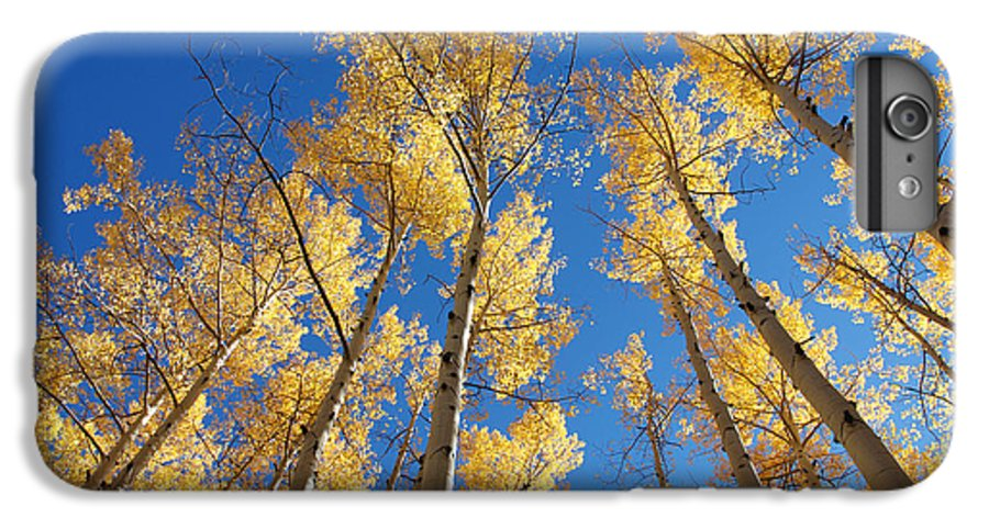Aspen IPhone 6 Plus Case featuring the photograph Colorado Aspen by Jerry McElroy
