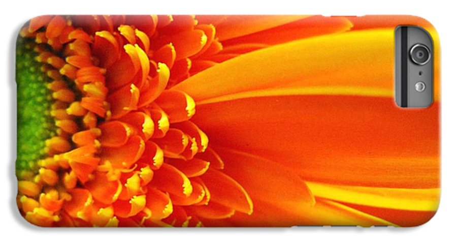 Red IPhone 6 Plus Case featuring the photograph Colors Galore by Rhonda Barrett