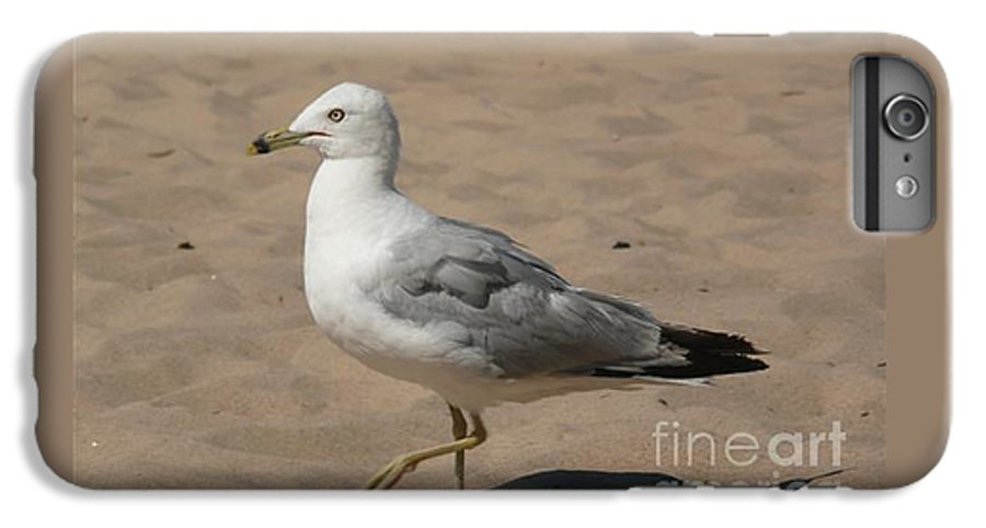 Bird IPhone 6 Plus Case featuring the photograph Come On Take The Picture Already by Barb Montanye Meseroll