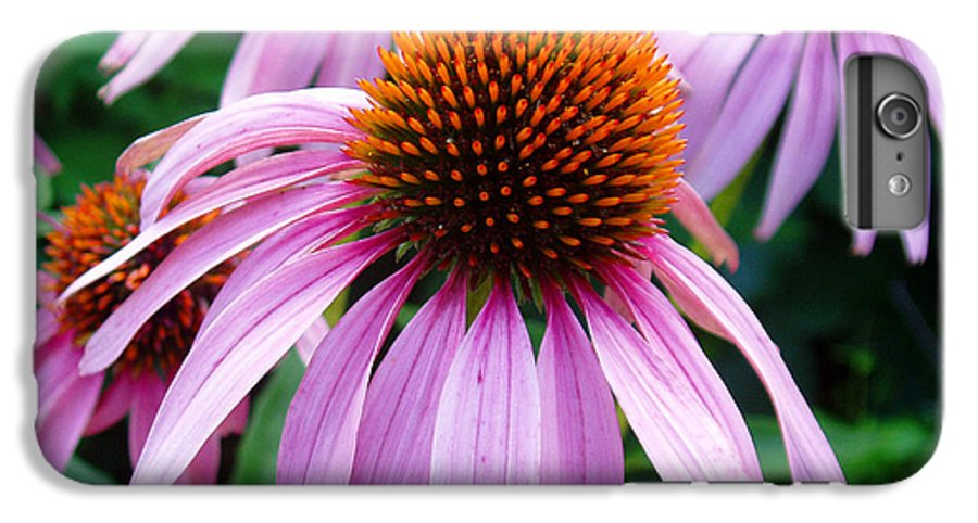 Coneflowers IPhone 6 Plus Case featuring the photograph Three Coneflowers by Nancy Mueller