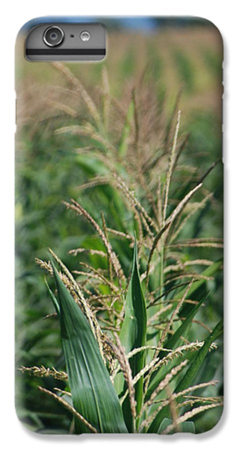 Country IPhone 6 Plus Case featuring the photograph Corn Rows by Margaret Fortunato