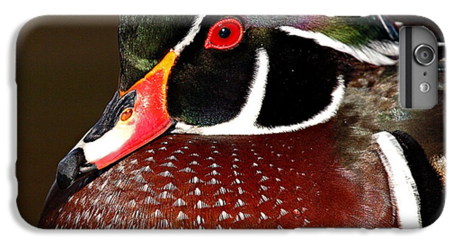 Duck IPhone 6 Plus Case featuring the photograph Courtship Colors Of A Wood Duck Drake by Max Allen