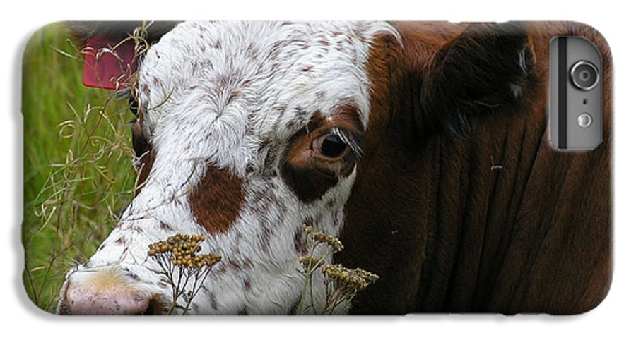 Tongue IPhone 6 Plus Case featuring the photograph Cow Tongue by Louise Magno
